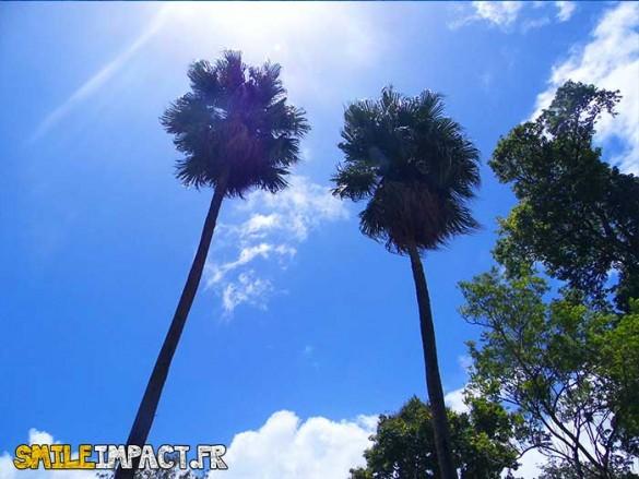 Jardin botanique - Des arbre très hauts