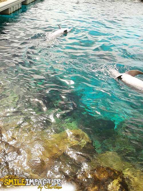 Sea Aquarium Park où on peut nager avec les dauphins- Curacao
