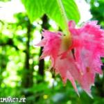 Fleurs du Domaine d'émeraude