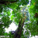 Entouré par de gigantesque arbre de forêt - Domaine d'émeraude