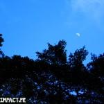 La lune qui apparait dans cette foret :) - Domaine d'émeraude