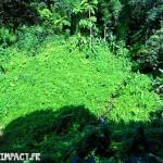 Le domaine d'émeraude est en pleine forêt