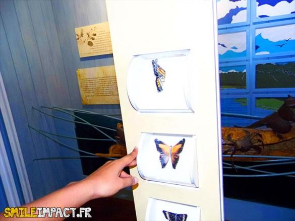 Papillon découverte ludique dans de petites roues
