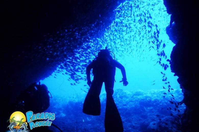 plongée sous marine - Martinique Precheur